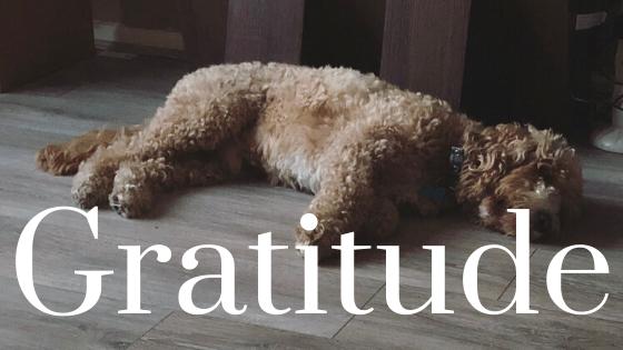Murphy dog napping