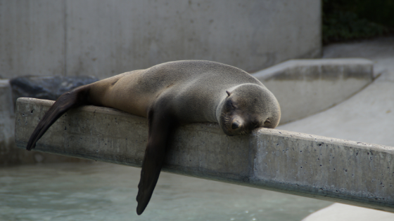 Seal having a nap